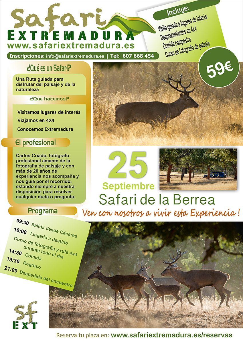 Safari Berrea. Oferta de la ruta en 4x4 a conocer la berrea del venado en Extremadura, con curso fotográfico.