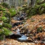 valle-de-ambroz-riachuelo