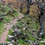 valle-de-ambroz-sendero